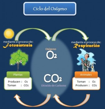 ciclooxigeno2