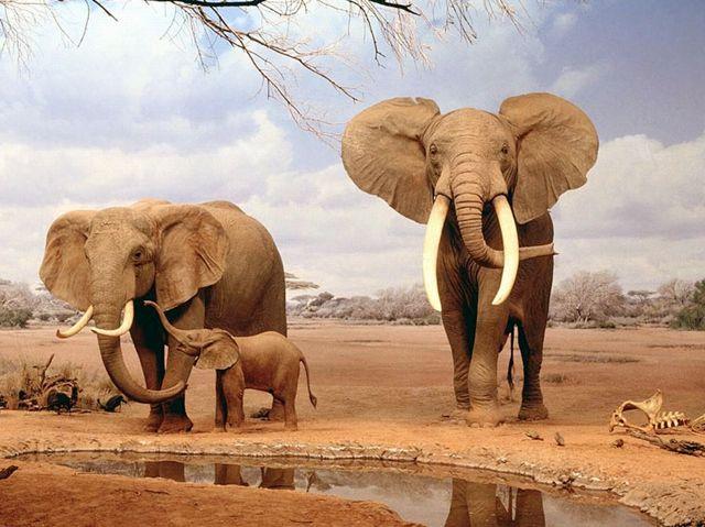 elephantlife